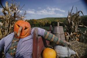 scarecrow-560x377